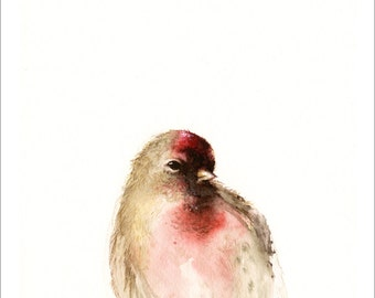Red- Male Redpoll Archival print of watercolor, bird art, nature, woodland