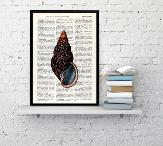 Art Print Sealife print Seashell III Print wall art poster print, shell print, wall hanging sealife print, Bathroom SEA017