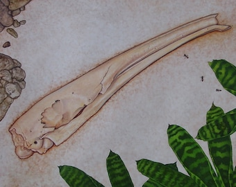 """Anteater Skull painting from the """"A"""" page of The Skull Alphabet Book"""