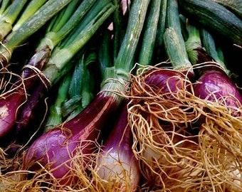 FARMER'S MARKET GALLERY 10 different pix TikiTotsPrints4Sale