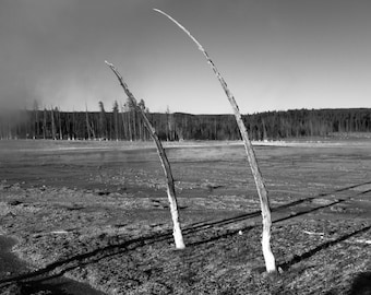 Wayward Trees - White Trunks IV: An Archival Pigment Fine Art Print of the Fossilized Trees in Yellowstone, Wyoming