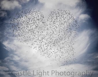 Valentines photo, romantic photo, heart, square format, fine art, wall decor, starlings,animal print, animal photo, Free UK P&P