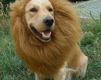 & Cat lion costume | Etsy
