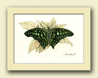 Tailed jay butterfly - insect butterfly animal-  insect decor - animal life  wall art - Original watercolor painting- Juan Bosco
