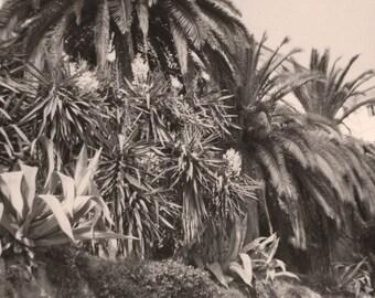 Beige Jungle Vintage Photo Print