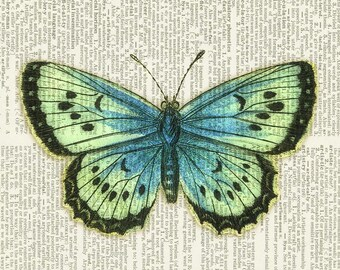 Butterfly aqua-green print