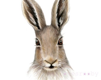 Hare A3 Giclee Art print/ British Wildlife drawing/ color pencil/ colour pencil