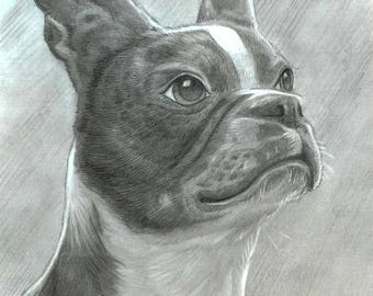 Custom Pet Portrait Drawing: Let me draw your cat, dog, horse, rhino, or octopus