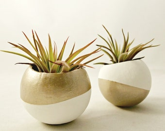 Inverse Air Plant Pod Set // Gold + White (with Air Plants)
