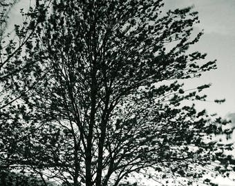 Black and white tree.. stunning