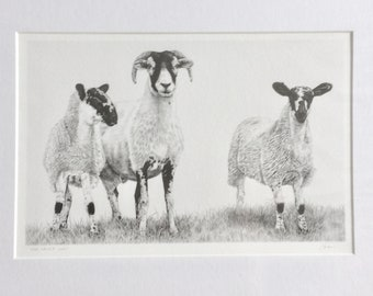 Swaledale Sheep & lambs Print- Yorkshire Ram Giclee Special Edition- 'The Dales Way'