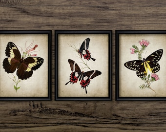 Vintage Butterfly Print Set of 3 - Antique Butterfly Posters - Entomology Art - Printable Art - Set Of Three Prints #290 - INSTANT DOWNLOAD