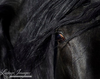Caballo Negro's Eye - Fine Art Horse Photograph - Horse - Andalusian - Fine Art Print