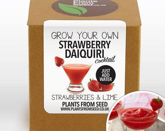 SALE NOW ON!!! - Grow Your Own Strawberry Daiquiri Plant Kit