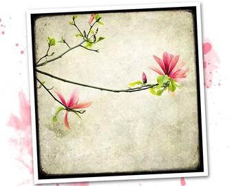 Branche de Magnolia - photo d'art signée 20x20cm