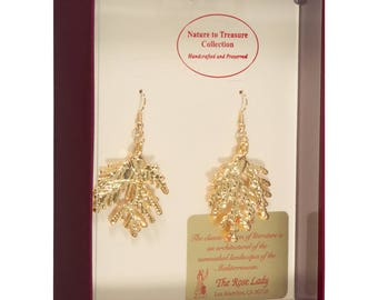 Real Cypress Leaves Dipped In 24k Gold - French Hook Earrings - 24k Gold Electroplated - Boxed