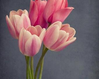 Tulip Print, Pink Tulip Photography Print, Tulip Art, Large Wall Art, Flower Photography, Girls Room Wall Art, Flower Wall Art