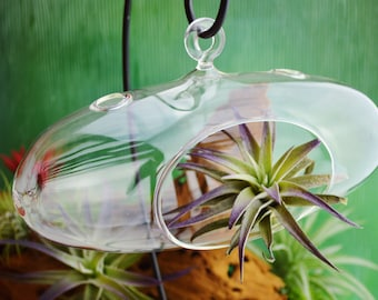 Horizontal Hanging Terrarium ~ Glass Globe Orb ~ Orb  Only ~ See other listings for Terrarium Kits