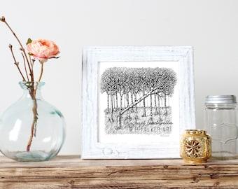 Aspen Forest Illustration  - Giclee Fine Art Print - Pen and Ink Illustration - Falling Aspen Tree Illustration