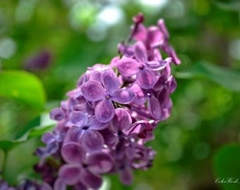 Lilac Print, Flower Photo, Flower Photography, Fine Art Photography, Spring Photo, Bokeh, Nature Photo, Purple Flower Photo, Floral Wall Art