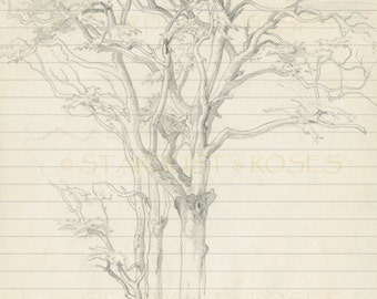 JOURNAL Paper DOWNLOAD Original Lined TREE Stationery - Instant Digital Print - Scrapbook Paper Letter Writing Digital Page Journaling #S111