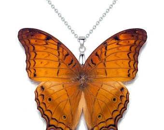 Real Butterfly Wing Necklace / Pendant (WHOLE Vindule Erota aka The Cruiser - W092)