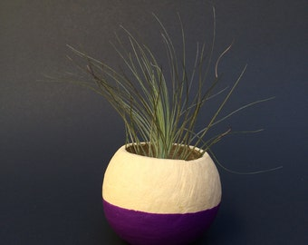Air Plant Pod - purple bottom