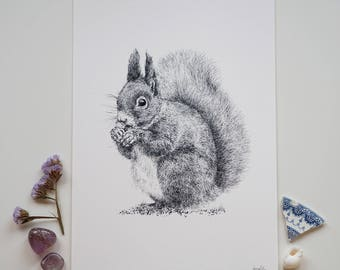 Red Squirrel Fine Art Giclee Print A4