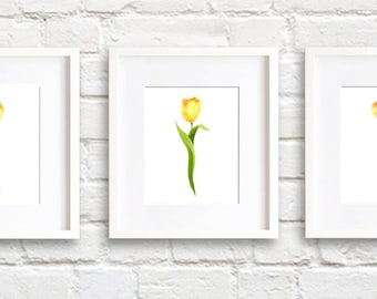 Pink Tulip Art Prints - Set of Three - Pink Tulips Wall Decor - Watercolor Painting