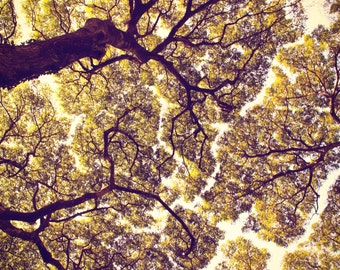 Tree Photography, Nature Prints, Silhouette of Branches, Fine Art Print