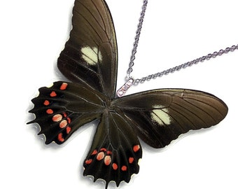 Real Butterfly Wing Necklace / Pendant (WHOLE Papilio Isidorus Butterfly - W124)