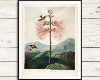 Botanical print set, hummingbird art, hummingbirds prints, hummingbird gifts, vintage hummingbird prints, vintage print reproduction poster