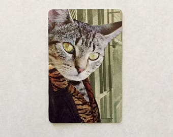 Collage on vintage playing card: feral cat