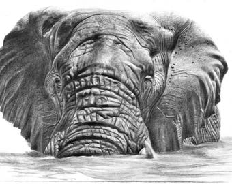 Elephant in Water Animal Print Graphite Pencil Drawing A4 and A3