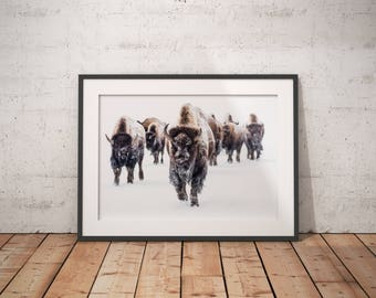 Bison Wall Art, Buffalo Wall Art, Bison Print, Buffalo Print, Animal Wall Art, Animal Print, Living Room Art, Farmhouse Decor, Animal Poster