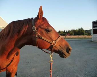 Chestnut Saddlebred At Dusk Horse Picture Card