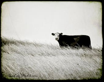 Cow photo 30x40 : black and white photography nature rural farm moo cattle ranch cowboy home decor