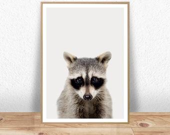 Racoon Print, Racoon Poster, Baby Animal Prints, Woodland Nursery Decor, Racoon Wall Art, Kids Wall Art, Baby Wall Print, Woodland Nursery