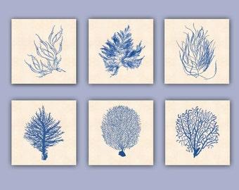 Sea fan art Prints, Ocean seafan Print, Sealife Nautical Art, Blue Sea fan art, nursery art, beach cottage decor, coral art, 12x12 prints