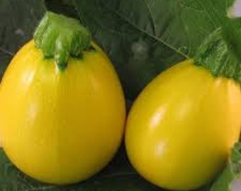 VSQS)~ONE BALL Hyb. Summer Squash~Seed!!!~~~~Great Single Serving Size!