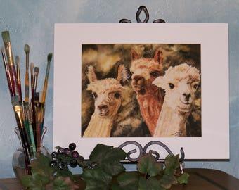 Alpaca Art Print, Farm Animal Art Print 8in x 10in