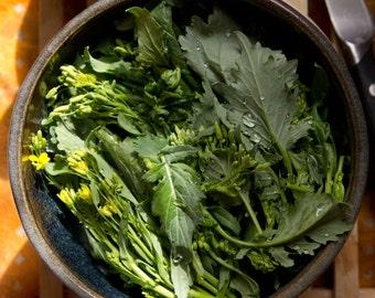 500+ Broccoli Raab (Rabe, Rapini) Seeds
