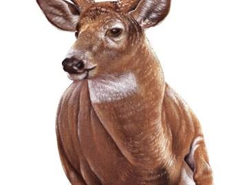 deer running decal, full color wild deer decal, realistic deer sticker, wildlife laptop sticker, animal vinyl decal, vinyl sticker