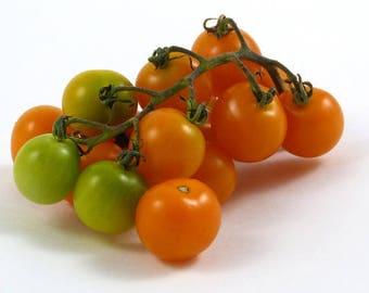Sungold Select II. Tomato seeds