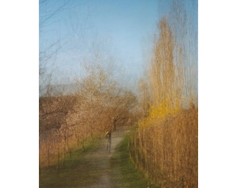 vanishing trail. large wall art. fine art photography. nature photography. canvas wall art. spring. surreal photography