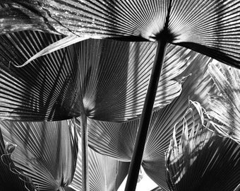 Kew Palms -  fine art monochrome photography
