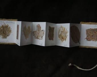Plant 4 - small unique accordion book textures