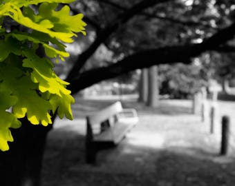 Park Bench - Black & White photography