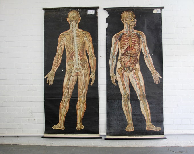 A Pair Of Early 20th Century German Anatomical Charts