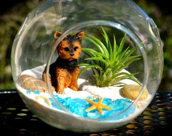 Dog Terrarium Kit ~ Small Air Plant Terrarium Kit ~ Cute terrier at Beach ~ Starfish ~ Beach Terrarium kit ~ Miniature Garden Kit ~ Gift